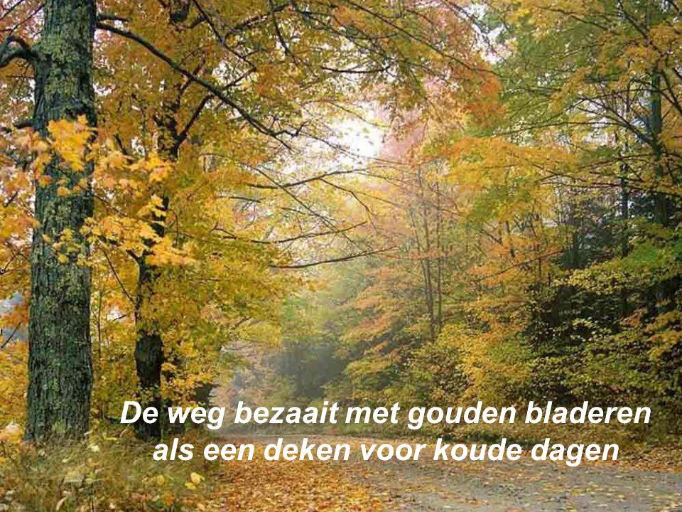 De weg bezaait met gouden bladeren als een deken voor koude dagen