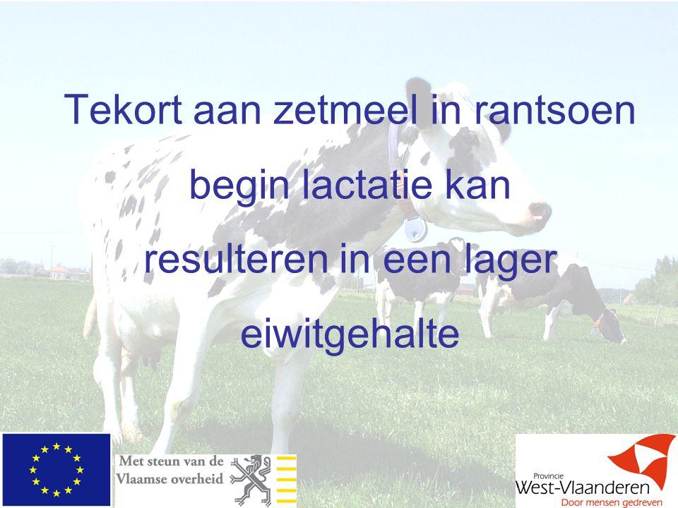 Tekort aan zetmeel in rantsoen begin lactatie kan resulteren in een lager eiwitgehalte