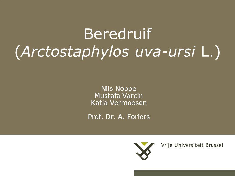 Beredruif (Arctostaphylos uva-ursi L.)