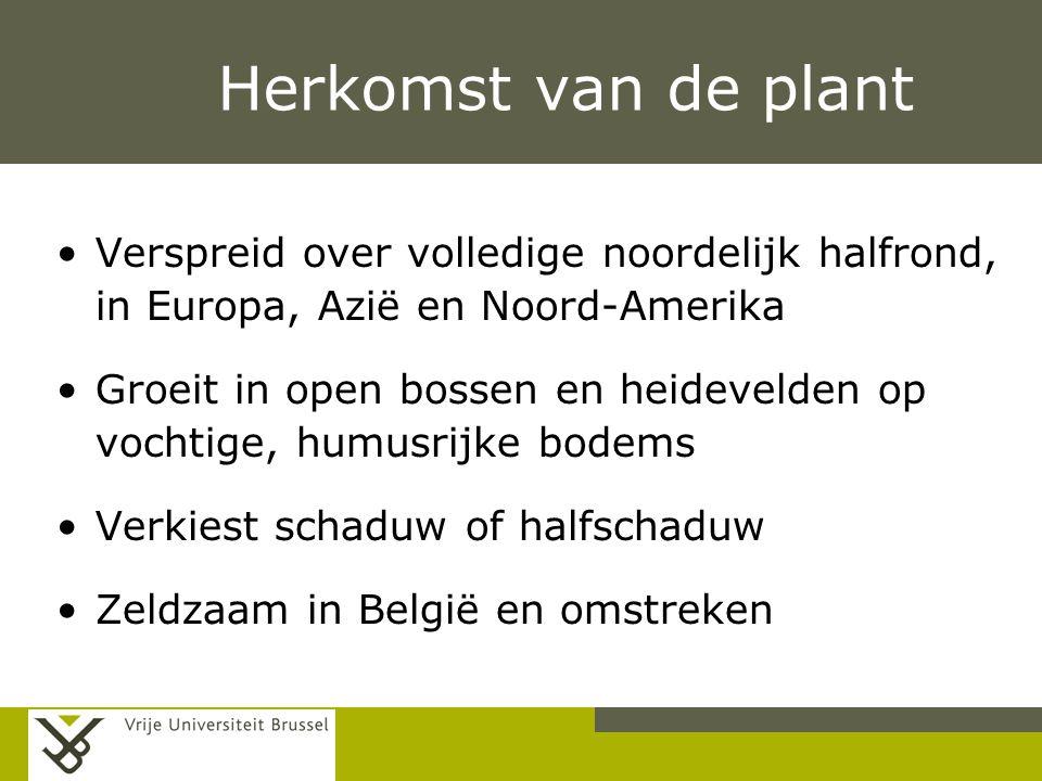 Herkomst van de plant Verspreid over volledige noordelijk halfrond, in Europa, Azië en Noord-Amerika.