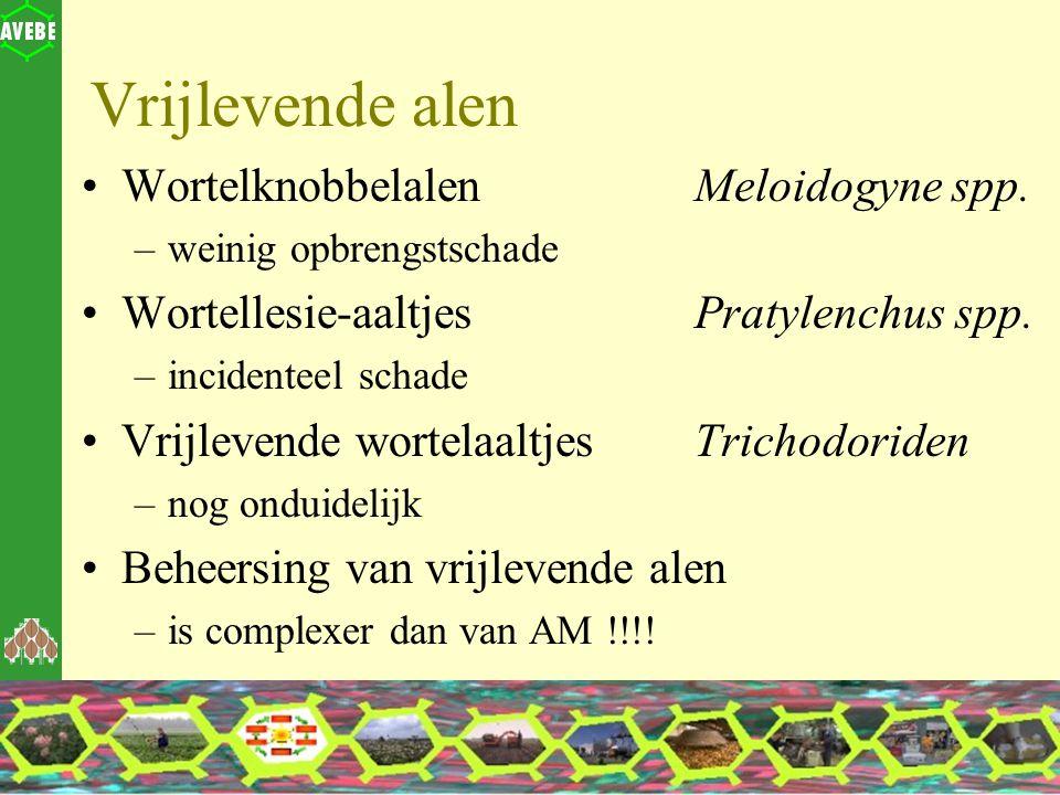Vrijlevende alen Wortelknobbelalen Meloidogyne spp.