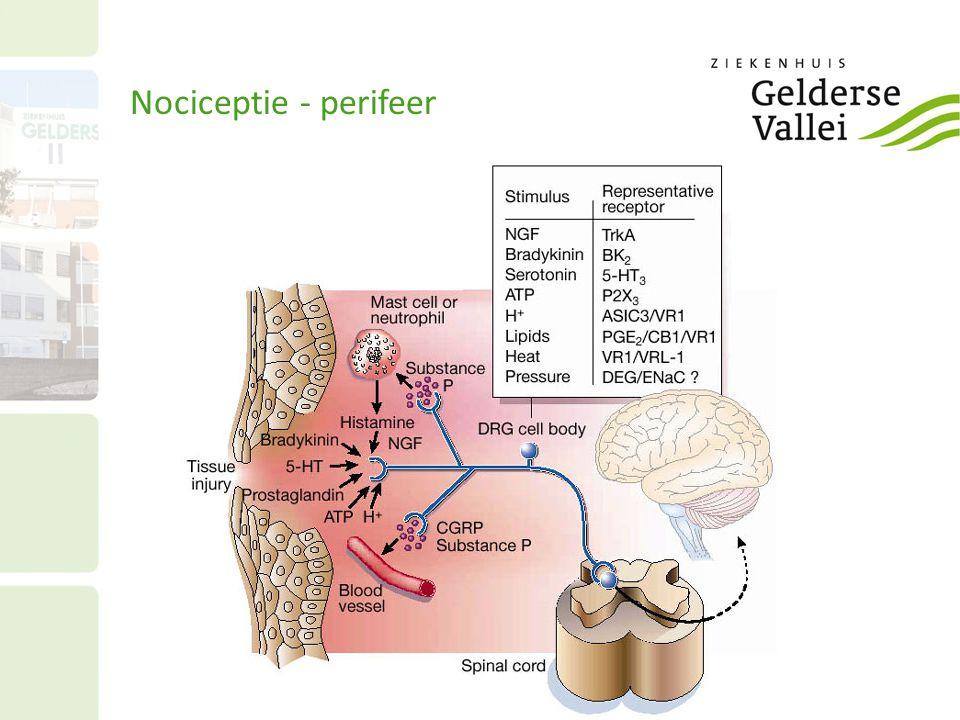 Nociceptie - perifeer