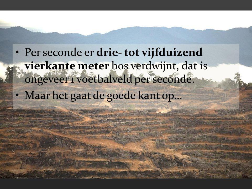 Bomen Per seconde er drie- tot vijfduizend vierkante meter bos verdwijnt, dat is ongeveer 1 voetbalveld per seconde.