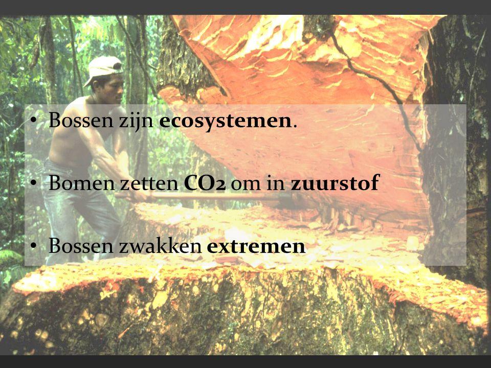 Bossen zijn ecosystemen.