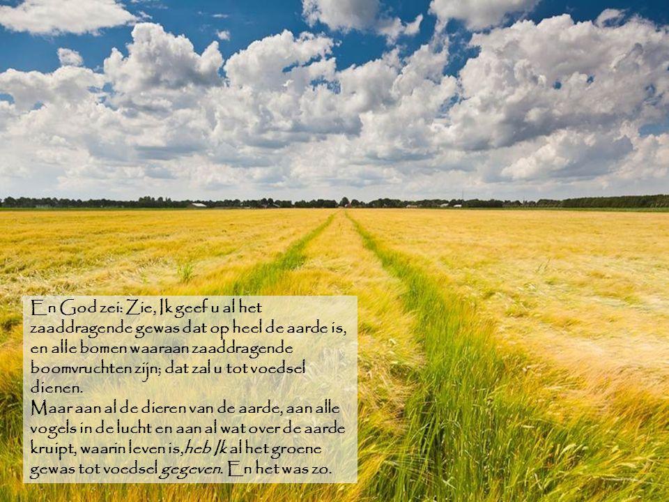 En God zei: Zie, Ik geef u al het zaaddragende gewas dat op heel de aarde is, en alle bomen waaraan zaaddragende boomvruchten zijn; dat zal u tot voedsel dienen.