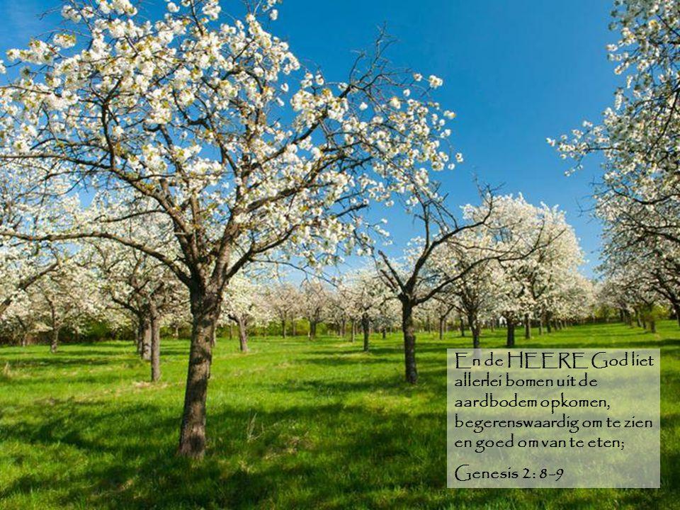 En de HEERE God liet allerlei bomen uit de aardbodem opkomen, begerenswaardig om te zien en goed om van te eten;