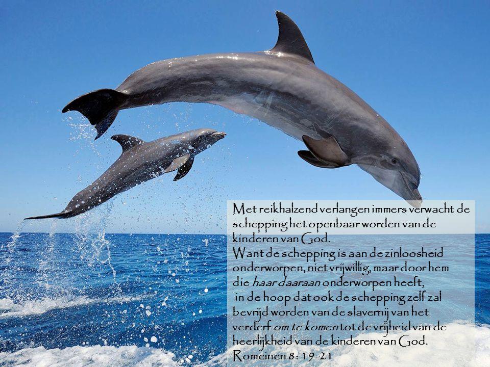 Met reikhalzend verlangen immers verwacht de schepping het openbaar worden van de kinderen van God.