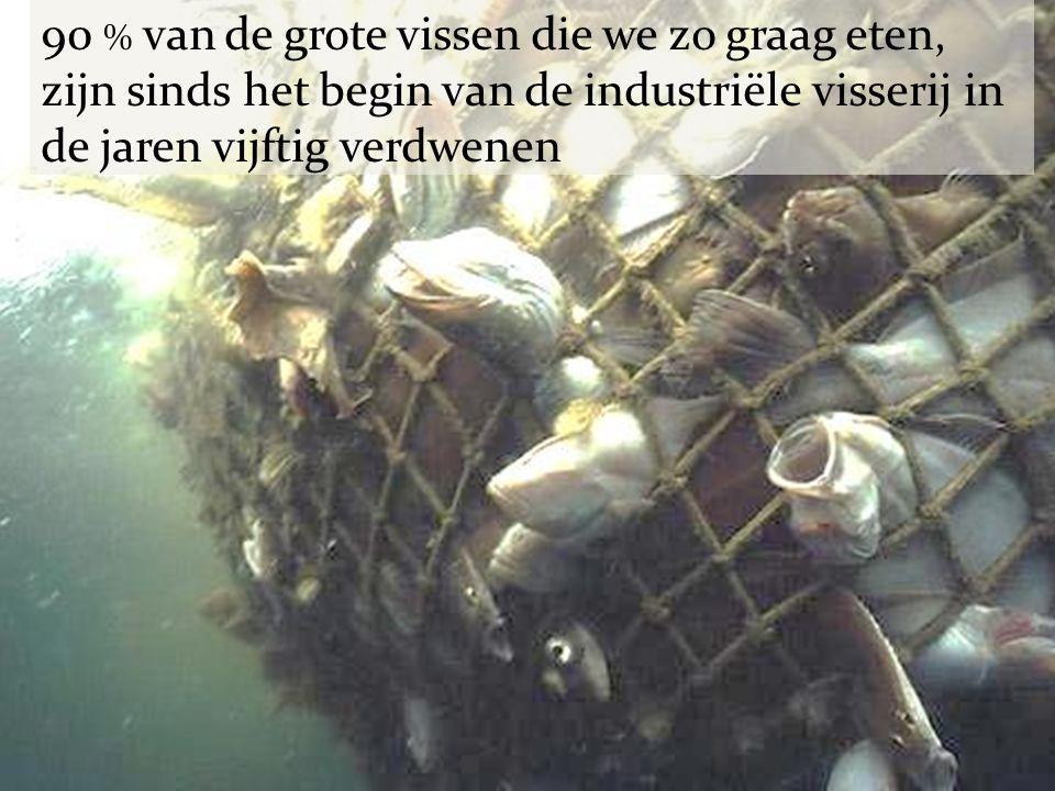 90 % van de grote vissen die we zo graag eten, zijn sinds het begin van de industriële visserij in de jaren vijftig verdwenen