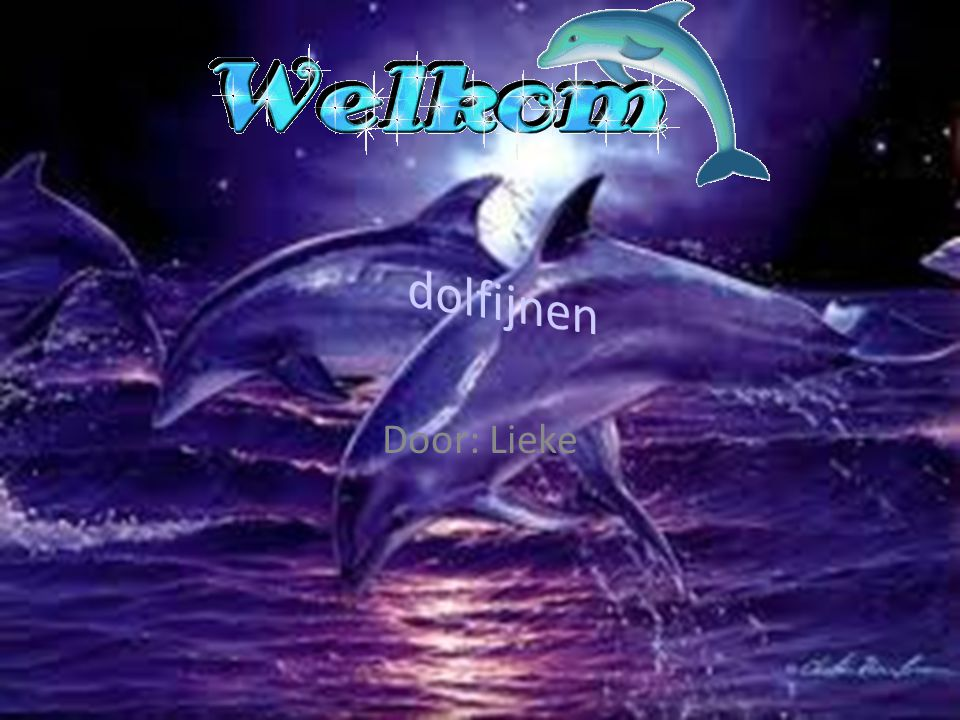 dolfijnen Door: Lieke