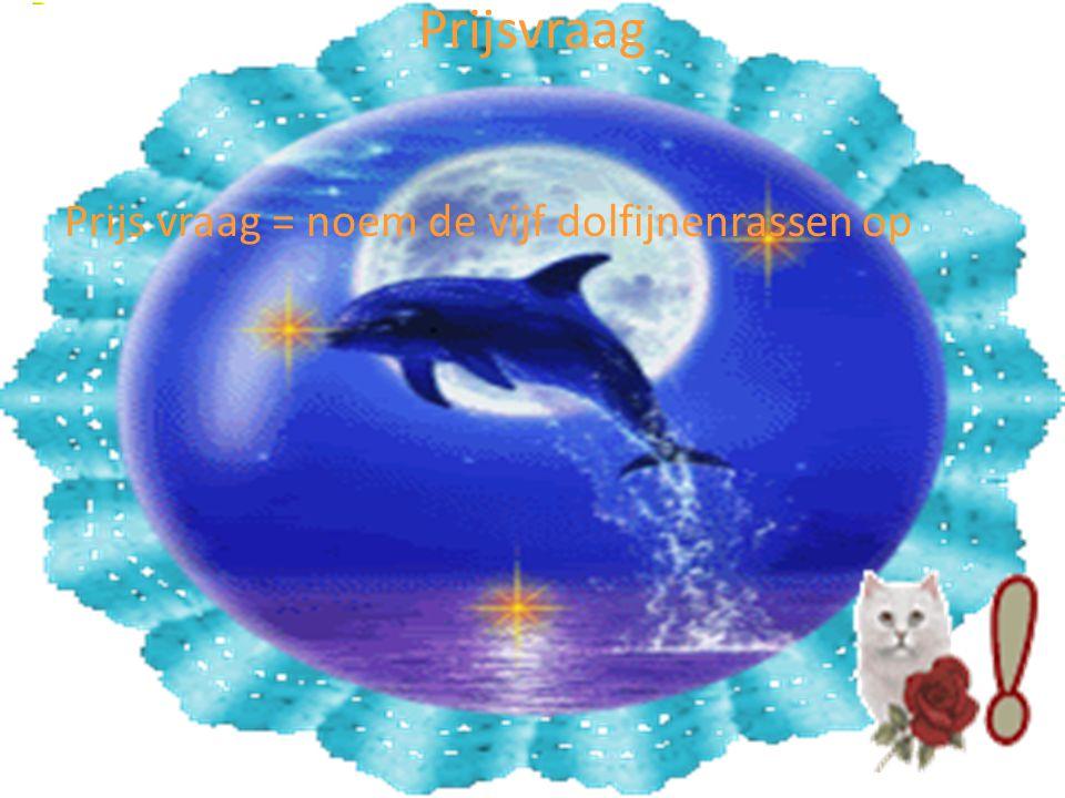 Prijsvraag Prijs vraag = noem de vijf dolfijnenrassen op