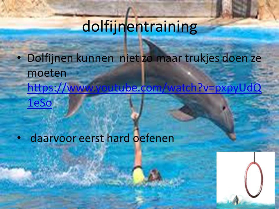 dolfijnentraining Dolfijnen kunnen niet zo maar trukjes doen ze moeten https://www.youtube.com/watch v=pxpyUdQ1eSo.