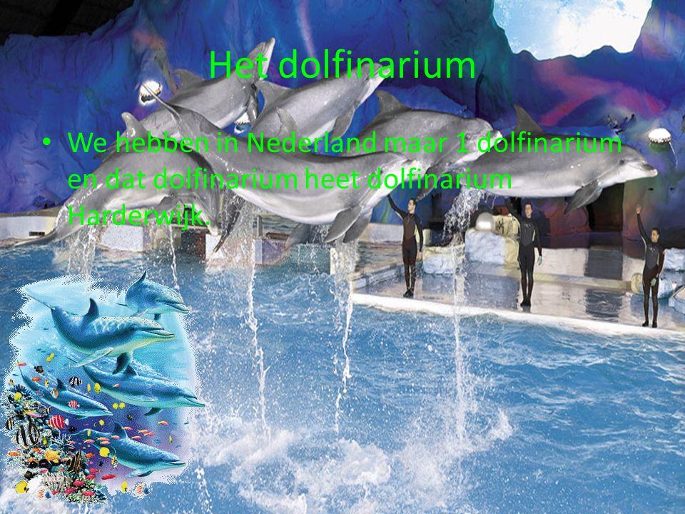 Het dolfinarium We hebben in Nederland maar 1 dolfinarium en dat dolfinarium heet dolfinarium Harderwijk.