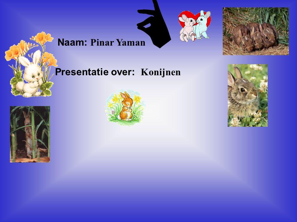 Presentatie over: Konijnen
