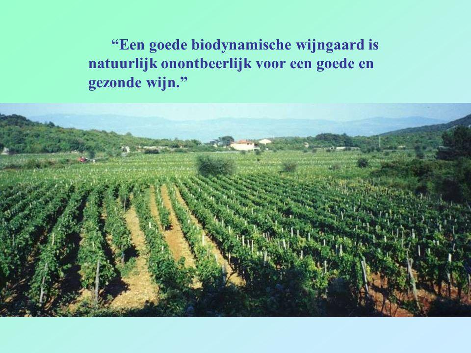 Een goede biodynamische wijngaard is natuurlijk onontbeerlijk voor een goede en gezonde wijn.