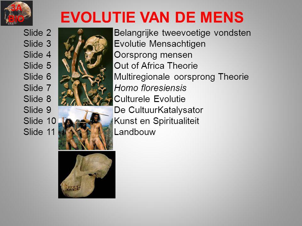 EVOLUTIE VAN DE MENS 3A BIO Slide 2 Belangrijke tweevoetige vondsten