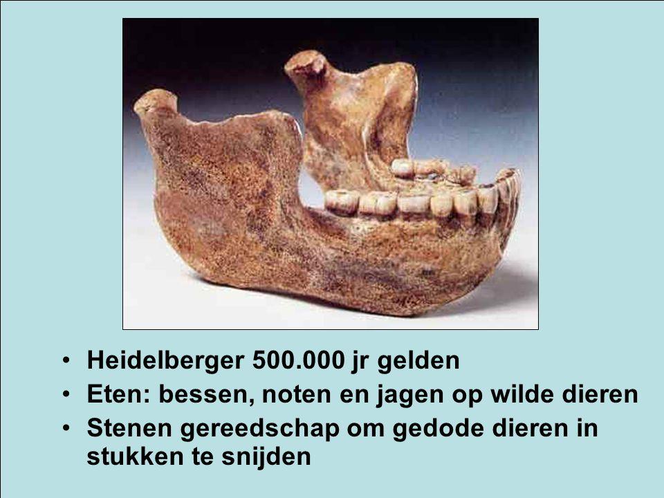 Heidelberger 500.000 jr gelden