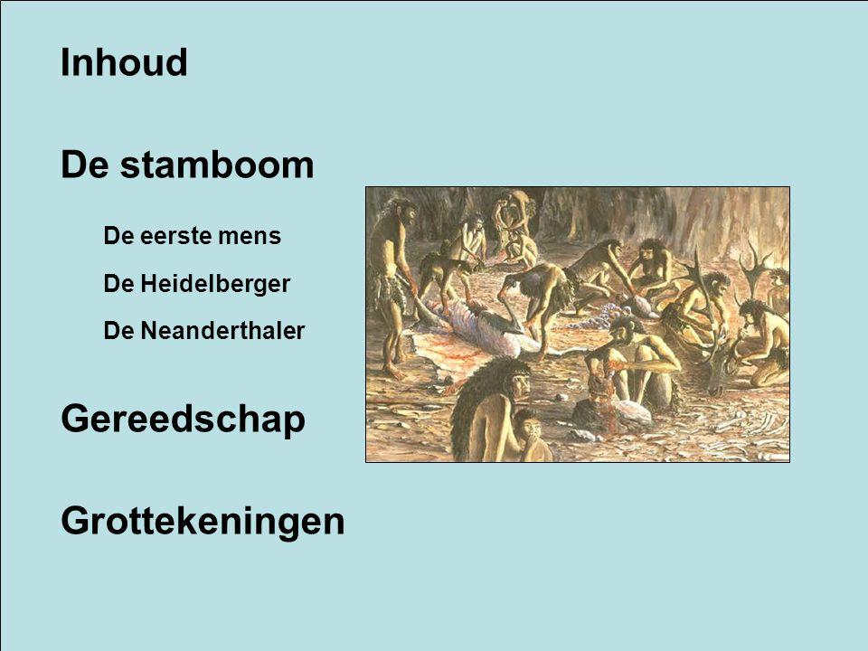 Inhoud De stamboom Gereedschap Grottekeningen De eerste mens