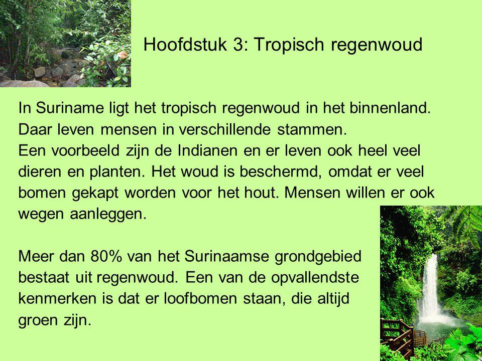 Hoofdstuk 3: Tropisch regenwoud