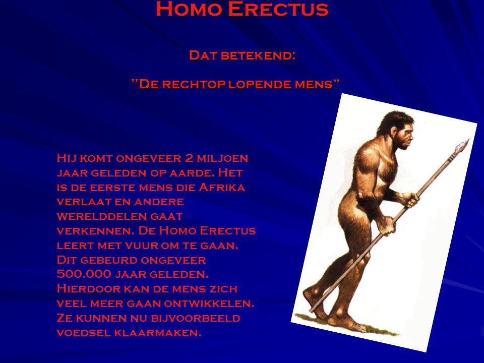 Homo Erectus Dat betekend: De rechtop lopende mens