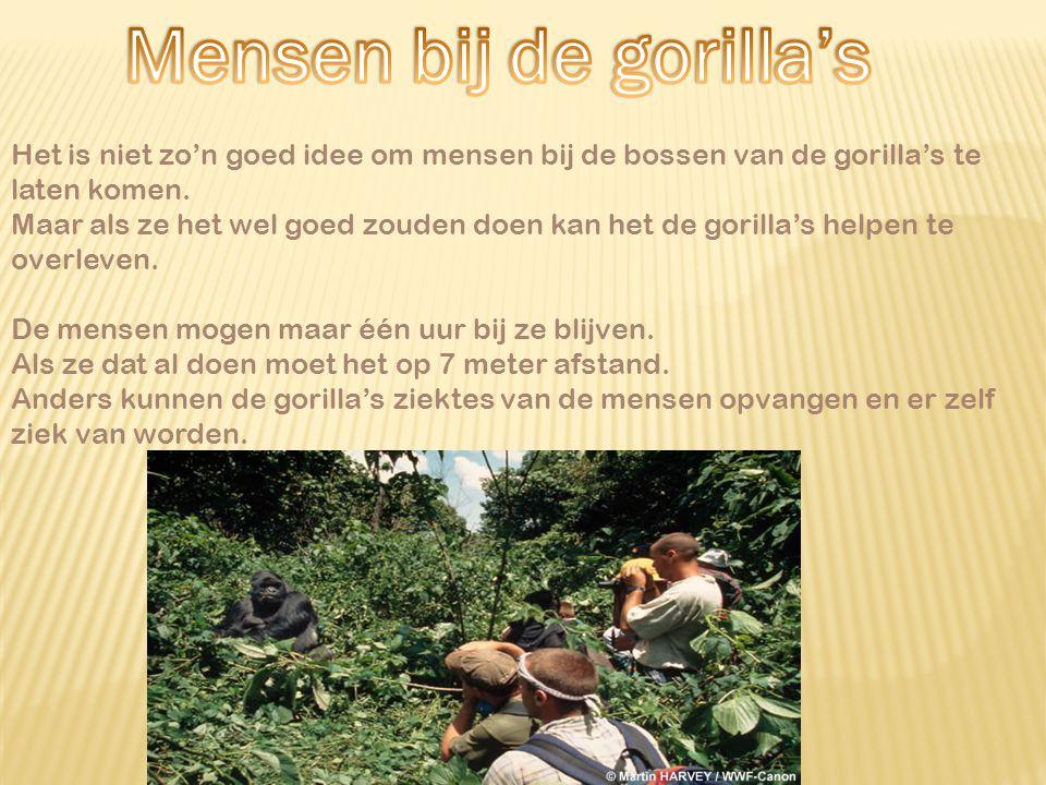 Mensen bij de gorilla's