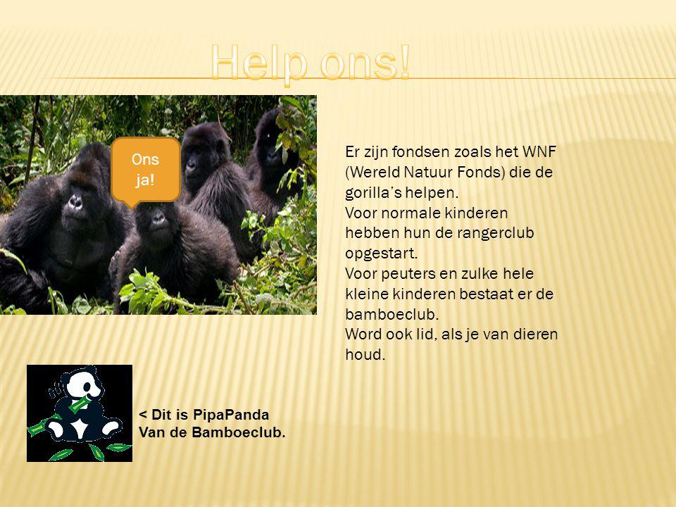Help ons! Ons ja! Er zijn fondsen zoals het WNF (Wereld Natuur Fonds) die de gorilla's helpen.