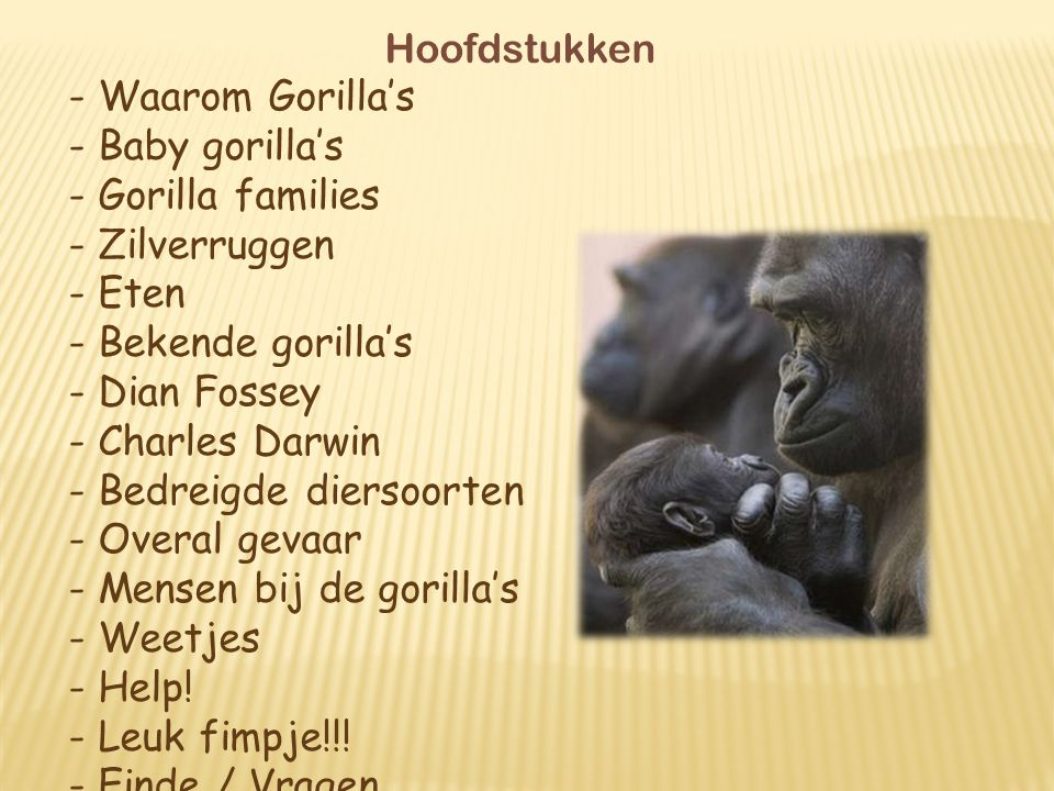 Bedreigde diersoorten Overal gevaar Mensen bij de gorilla's Weetjes