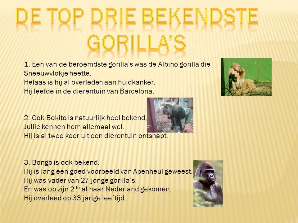 De top drie bekendste Gorilla's