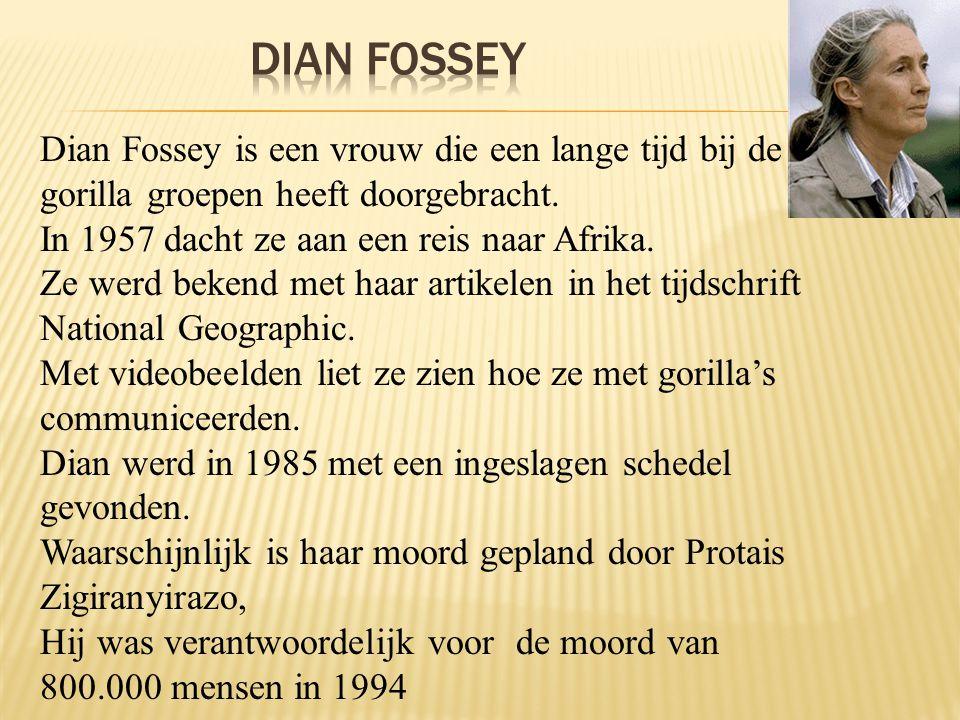 DiAN Fossey Dian Fossey is een vrouw die een lange tijd bij de gorilla groepen heeft doorgebracht. In 1957 dacht ze aan een reis naar Afrika.