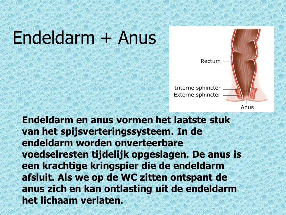 Endeldarm + Anus