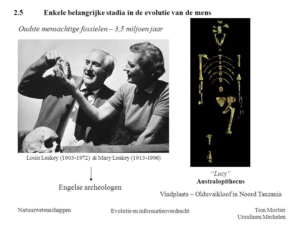 2.5 Enkele belangrijke stadia in de evolutie van de mens