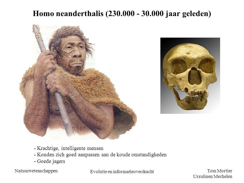 Homo neanderthalis (230.000 - 30.000 jaar geleden)