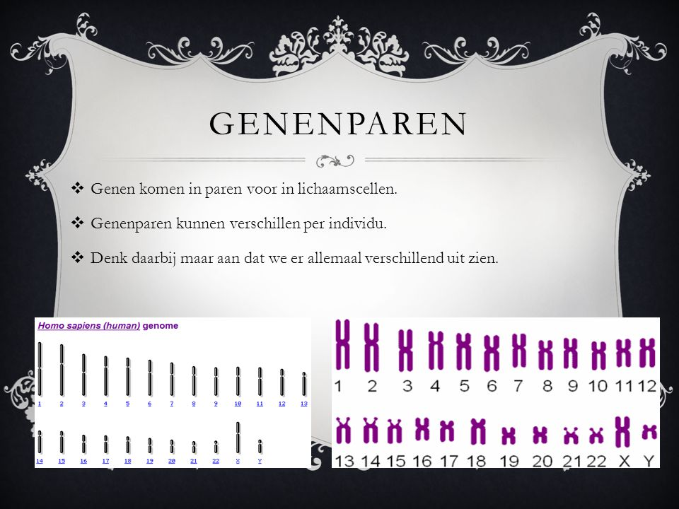 Genenparen Genen komen in paren voor in lichaamscellen.