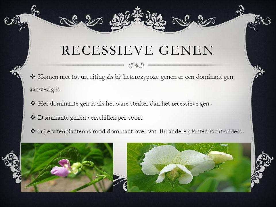 Recessieve genen Komen niet tot uit uiting als bij heterozygoze genen er een dominant gen aanwezig is.