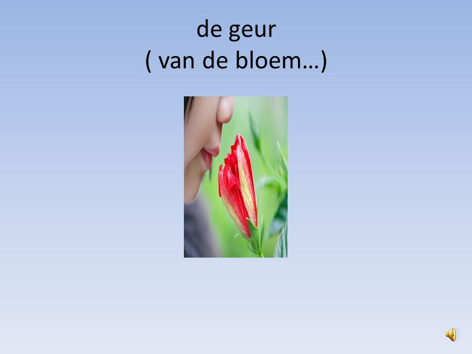 de geur ( van de bloem…)
