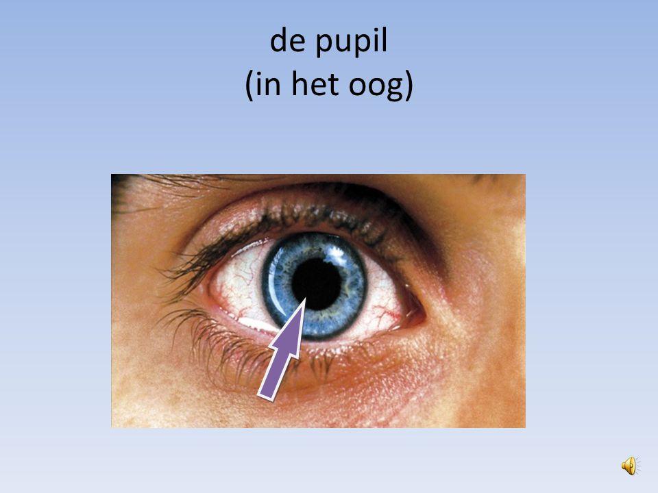 de pupil (in het oog)