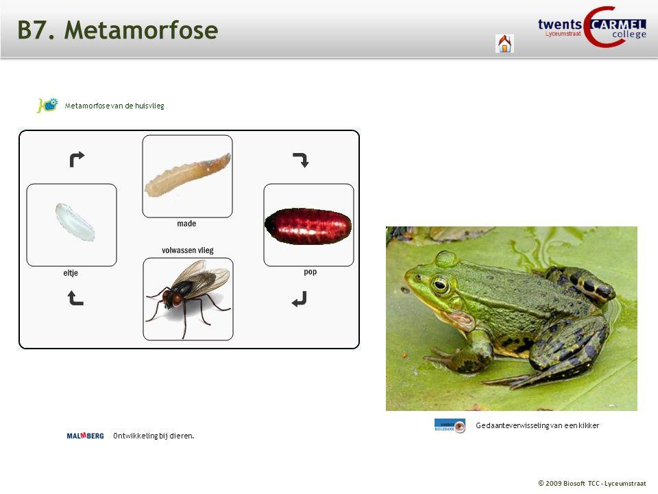 B7. Metamorfose Metamorfose van de huisvlieg