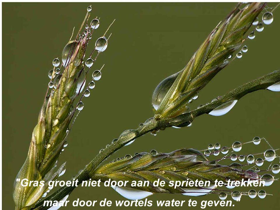 Gras groeit niet door aan de sprieten te trekken