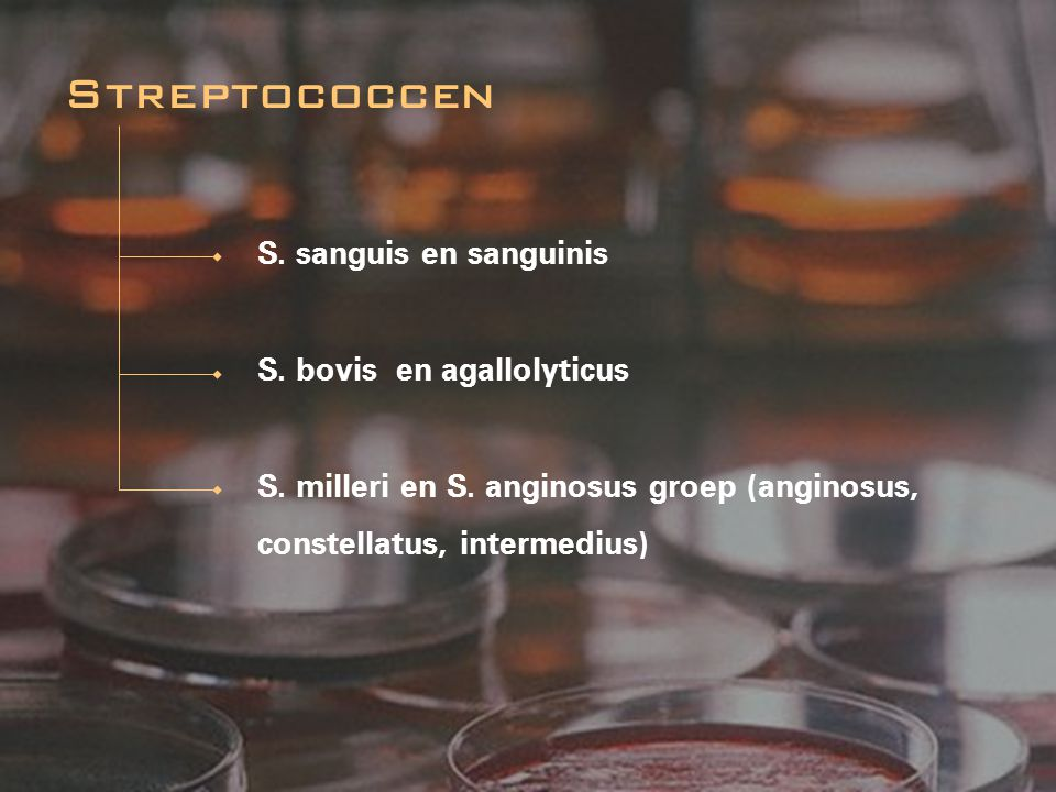 Streptococcen S. sanguis en sanguinis S. bovis en agallolyticus