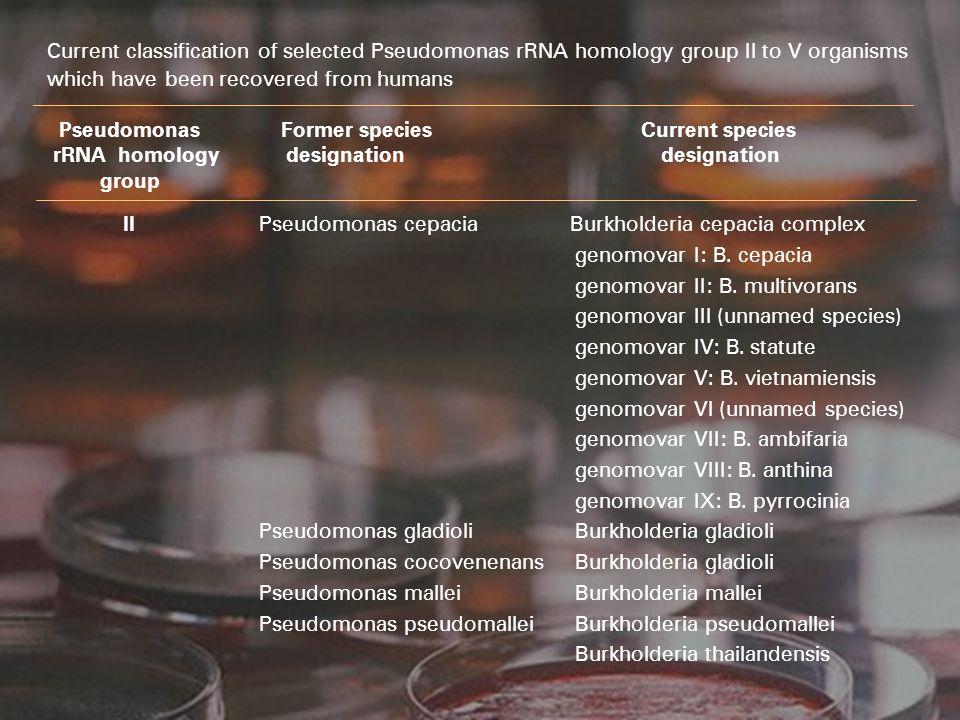 II Pseudomonas cepacia Burkholderia cepacia complex