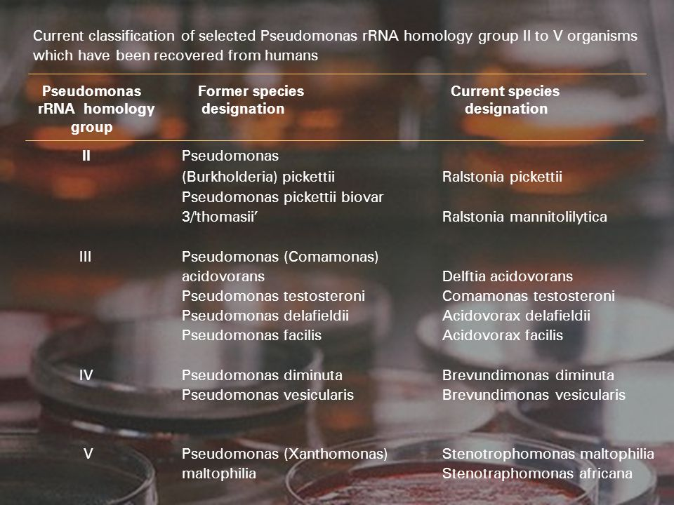 II Pseudomonas (Burkholderia) pickettii Ralstonia pickettii
