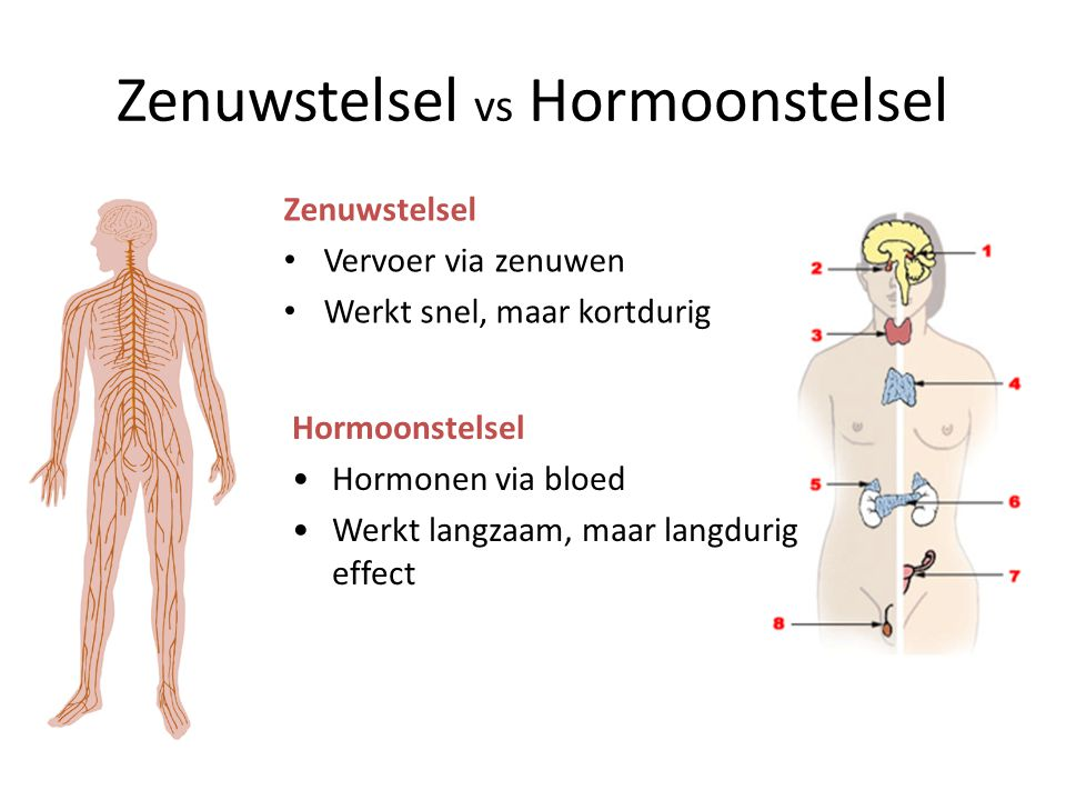 Zenuwstelsel vs Hormoonstelsel