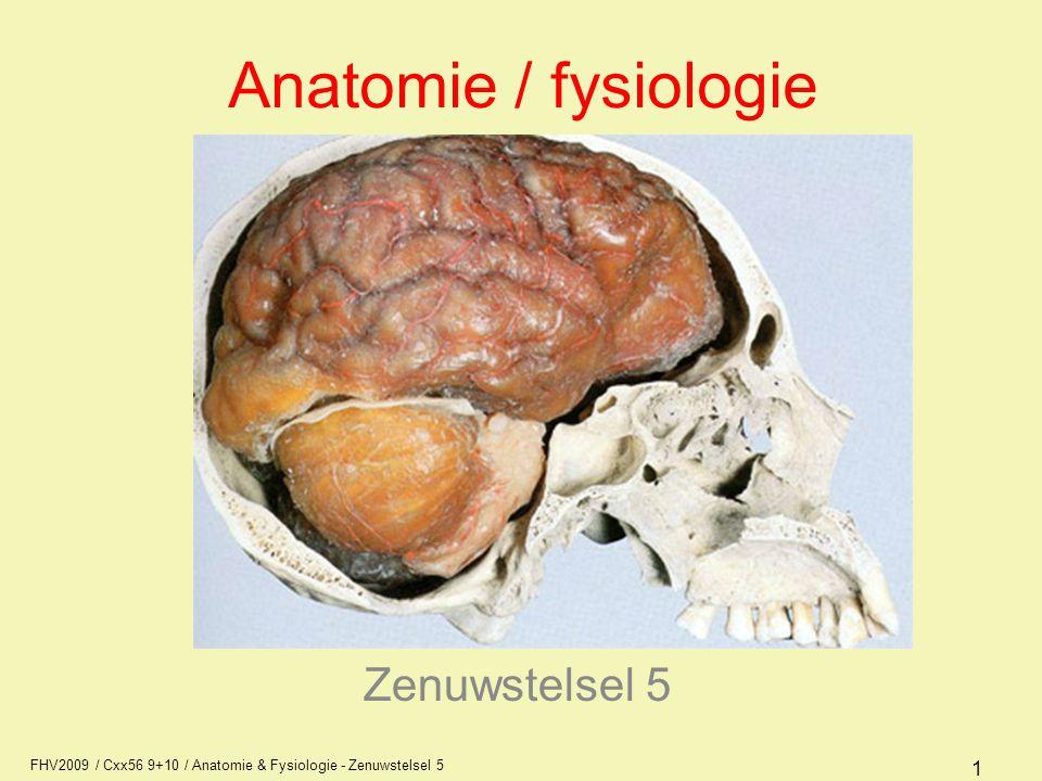 Anatomie / fysiologie Zenuwstelsel 5 AFI1
