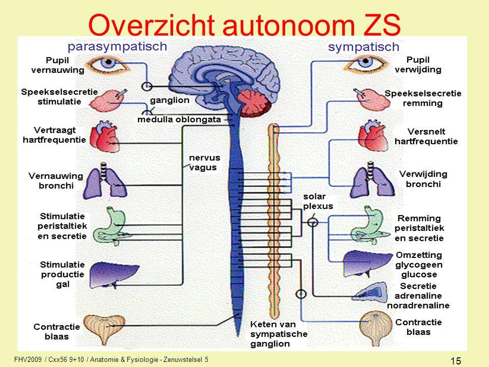 Overzicht autonoom ZS FHV2009 / Cxx56 9+10 / Anatomie & Fysiologie - Zenuwstelsel 5