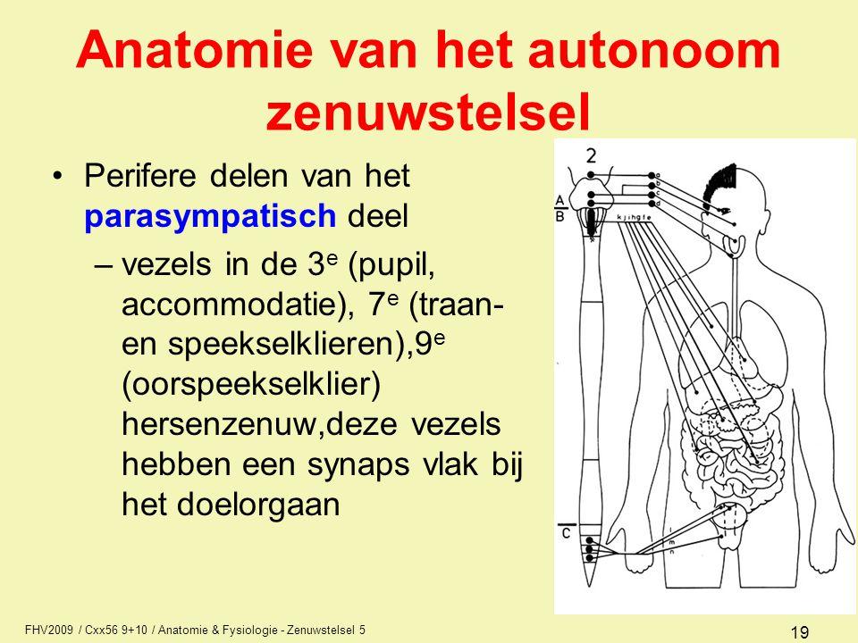 Anatomie van het autonoom zenuwstelsel
