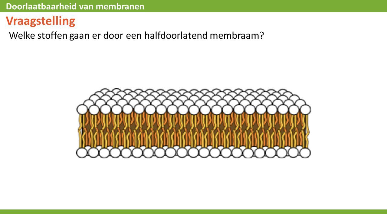 Vraagstelling Welke stoffen gaan er door een halfdoorlatend membraam