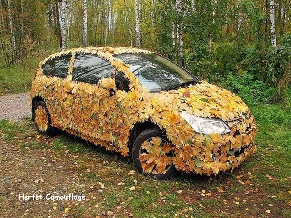 Herfst Camouflage
