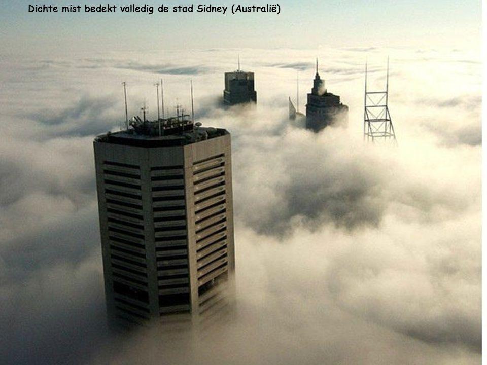 Dichte mist bedekt volledig de stad Sidney (Australië)