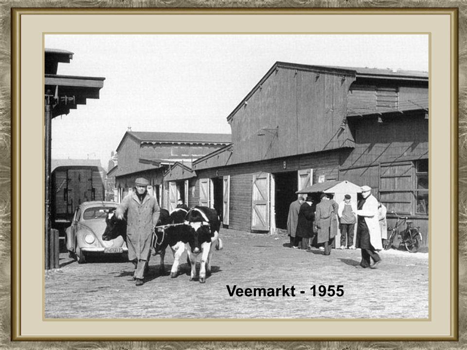Veemarkt - 1955