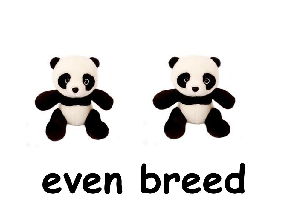 even breed