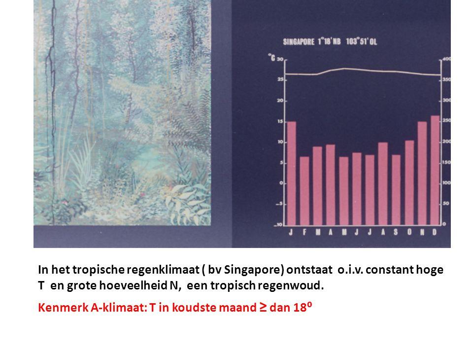 In het tropische regenklimaat ( bv Singapore) ontstaat o. i. v